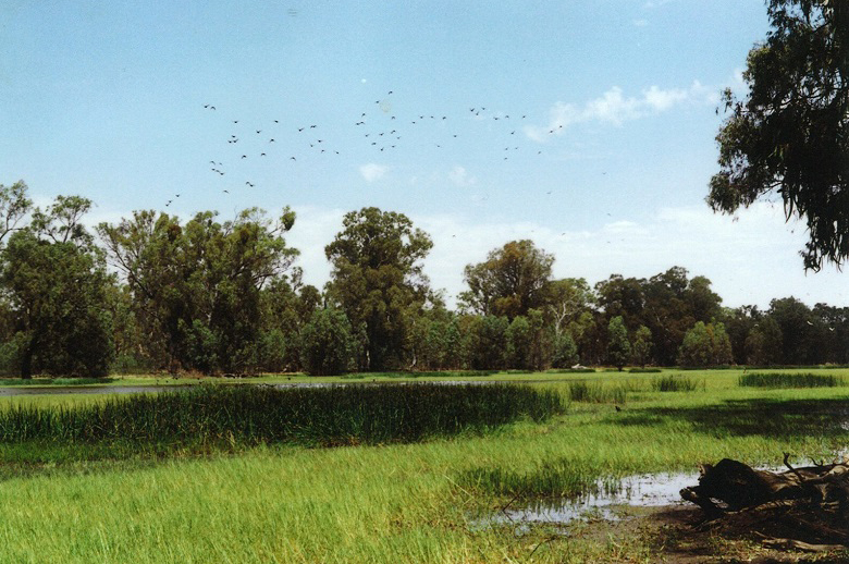McKennas Lagoon (2000): a healthy wetland environment supporting a variety of aquatic plant species.
