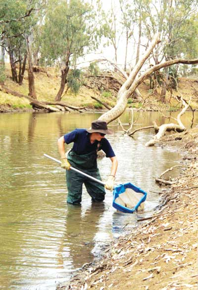 condamine river fresh water report · condamine river bubbles, gas and fish condamine river bubbles, gas and fish skip navigation sign in search.