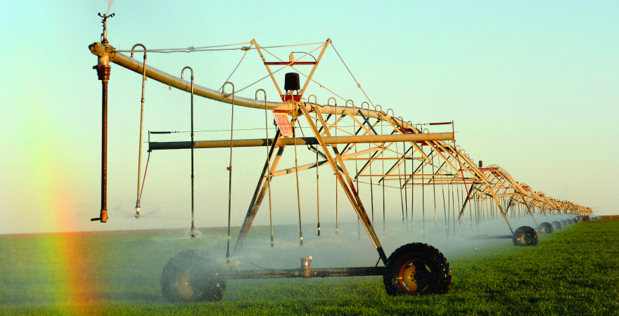 This photo shows a boom spray irrigating a crop of wheat near Hay in New South Wales.