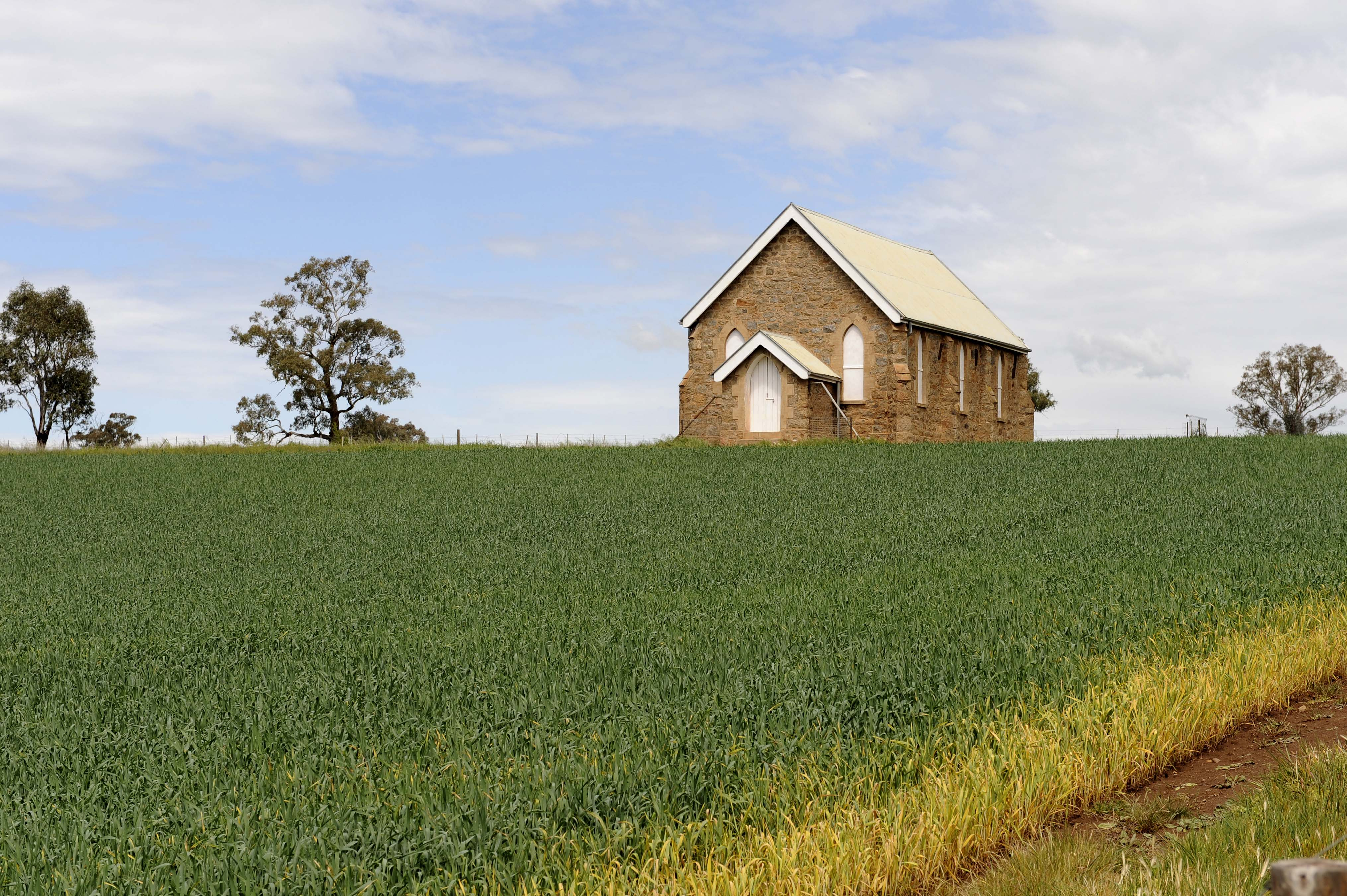 A picture of a church surrounded by a wheat crop