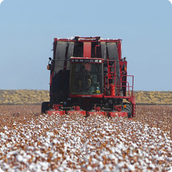 Cotton harvest – Darling Downs