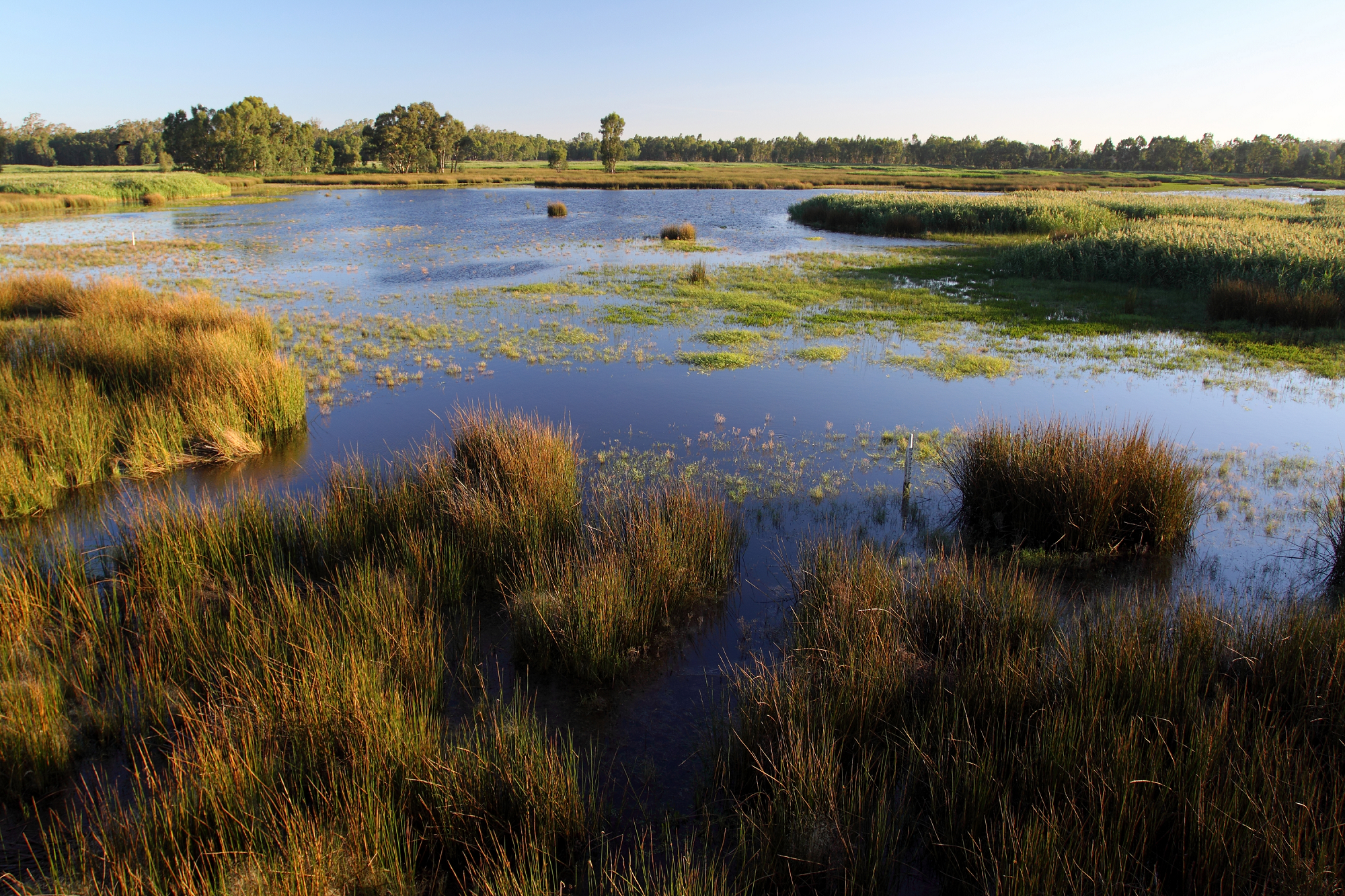 Reed Beds Swamp