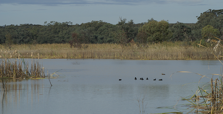 Banrock Station Wetland Complex, located along the River Murray in South Australia