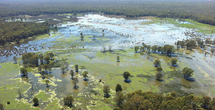 An aerial photo of the Barmah-Millewa Forest.