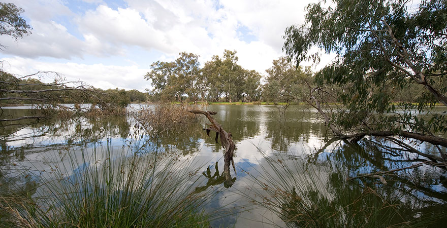 Photo of Horseshoe Lagoon surrounded by reeds and trees.