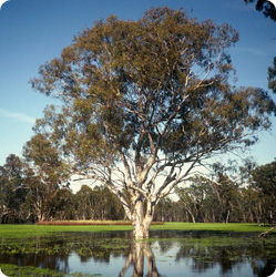 Barmah Forest National Park