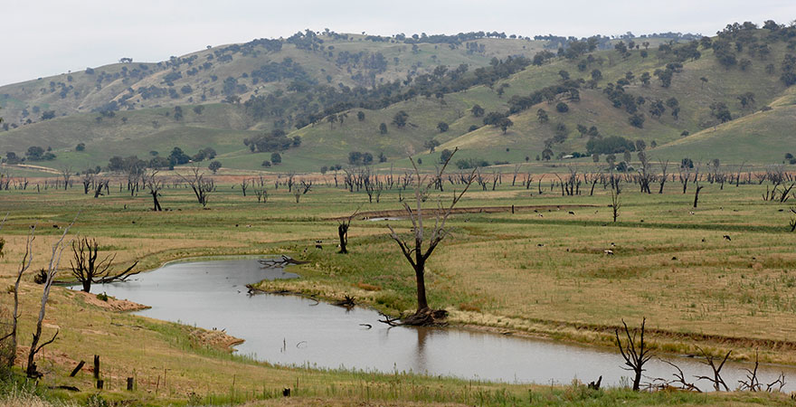 Photo of the Mitta Mitta River flowing through a field with mountains in the background.
