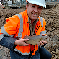 A critically endangered trout cod