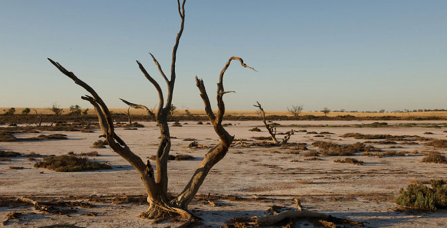 Salinity affected land south of Mildura, Victoria. Photo by Arthur Mostead.