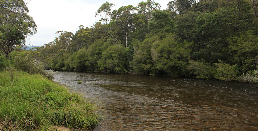 Photo of the River Murray near Tom Groggin in New South Wales, surrounded by bushland.