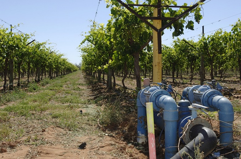 Drip irrigation system on table grape vines, near St George, Queensland. Photo by Arthur Mostead.