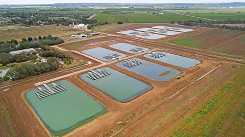 The Aquna Sustainable Murray Cod facility