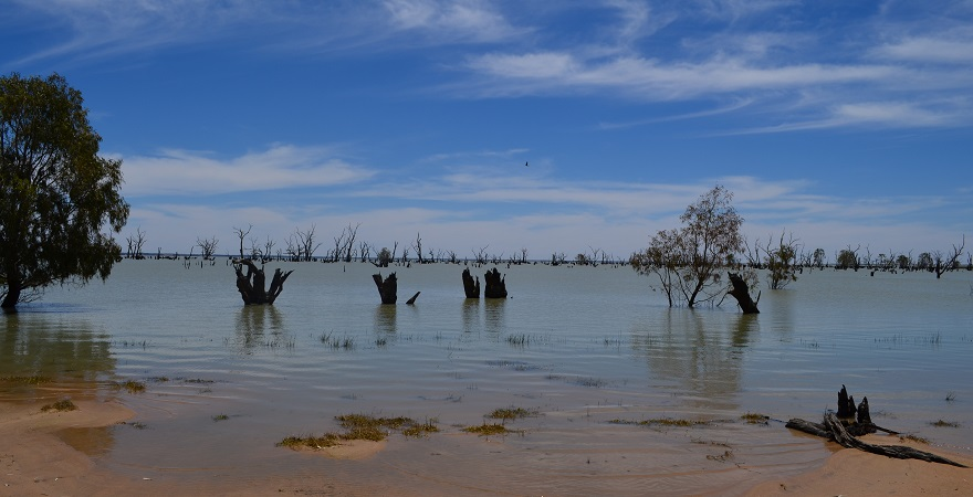 Lake Victoria in New South Wales. Tree trunks can be seen emerging from the surface of the lake.