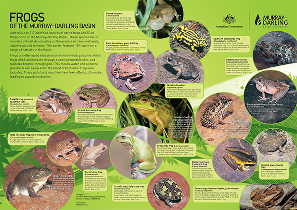 the murray darling basin essay If time permits you might like to study the murray-darling basin in more detail you can do this by accessing the website of the murray-darling basin authority the site enables students to explore the basin.