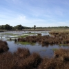 A wetland with brown and green grasses with a pool of water across it.