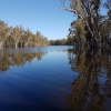 Flooding of the Barmah forest at the Barmah Creek and Murray junction (source Vanessa Olifent)