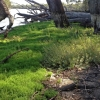 Fresh green vegetation sprouting on the banks of a river under gum trees.
