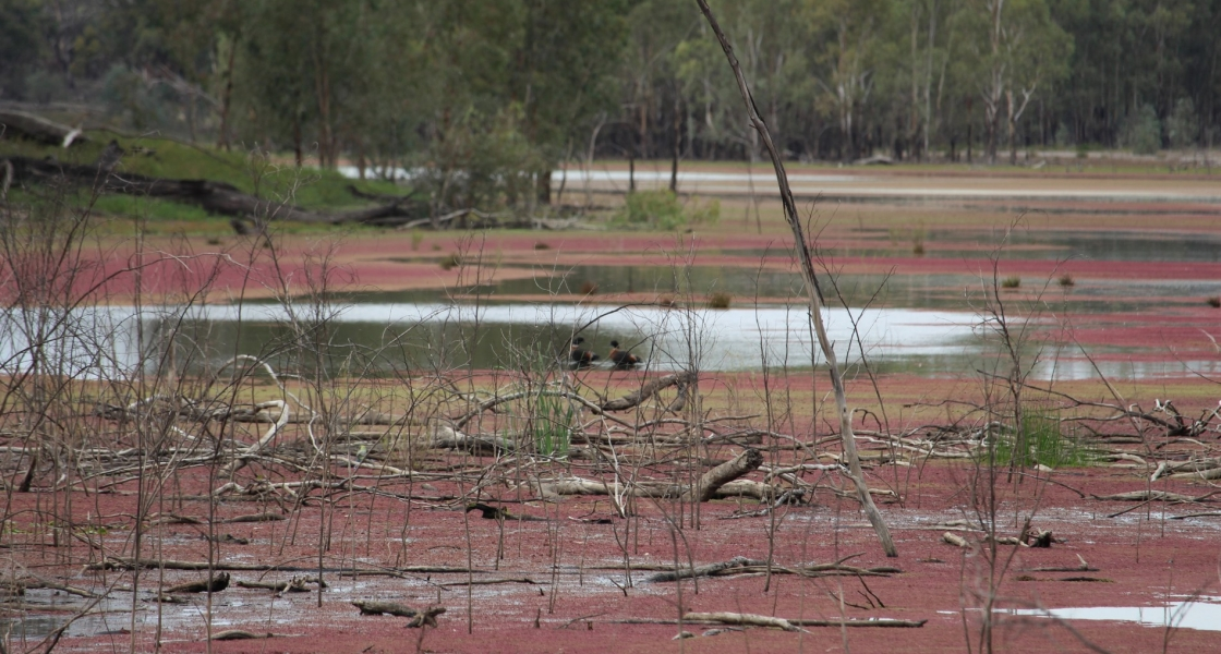 Websters Lagoon during drawdown (Credit: Mallee CMA)