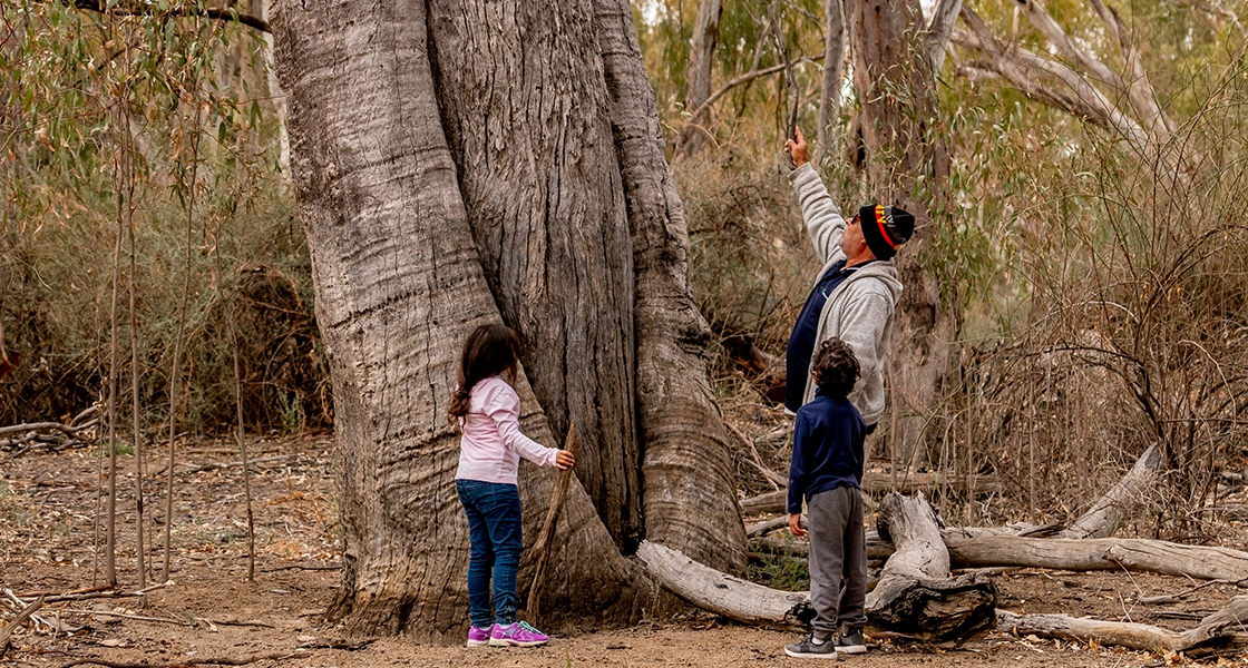 Sharing knowledge to the next generation. Canoe Tree at Snake Lagoon, Mulcra Island. (Mallee CMA)