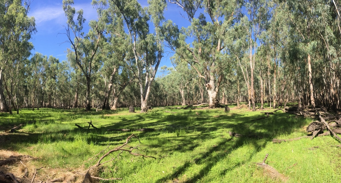 Western side of Pollack Swamp. (Photo: Jean Dind (FCNSW))