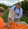 MDBA Chair Neil Andrew visited a citrus farm near Moree during the northern basin review.